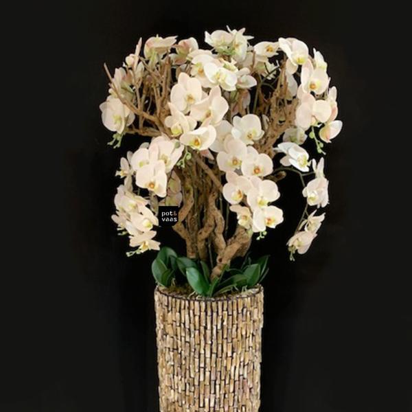 Orchidee tak groot sfeer